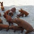 Tierische Freu...na ja Schweinerei